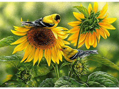 SUNFLOWERS & GOLDFINCHES 1000
