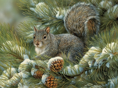 GRAY SQUIRREL 275pc *LgePc*