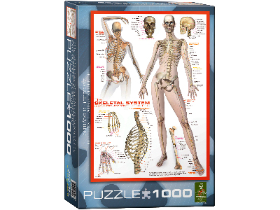 THE SKELETAL SYSTEM 1000pc