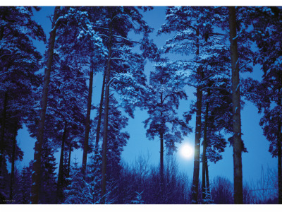 MAGIC FORESTS, FULL MOON 500pc