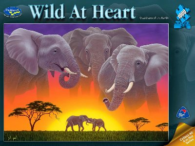 WILD AT HEART, ELEPHANTS 1000p
