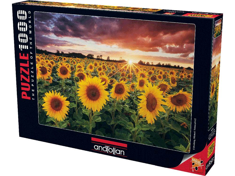 FIELD OF SUNFLOWERS 1000pc