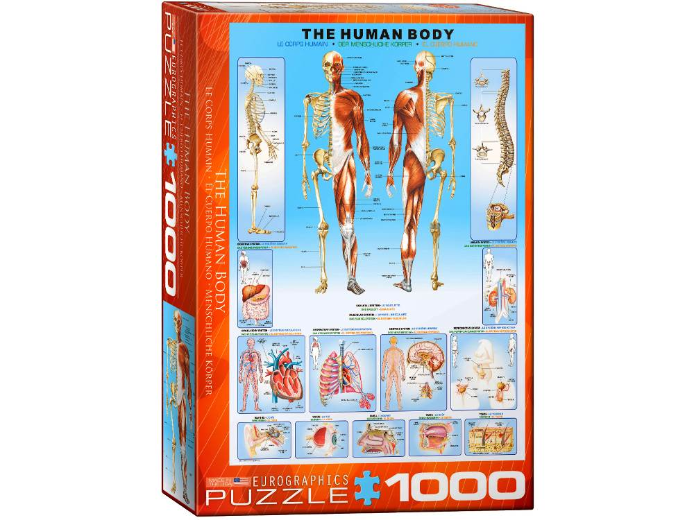 THE HUMAN BODY 1000pc