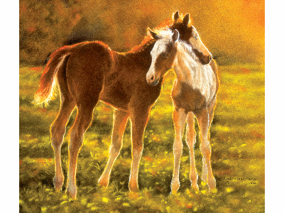 BACKLIT FOALS 550pc
