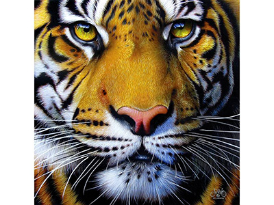 GOLDEN TIGER FACE 1000pc