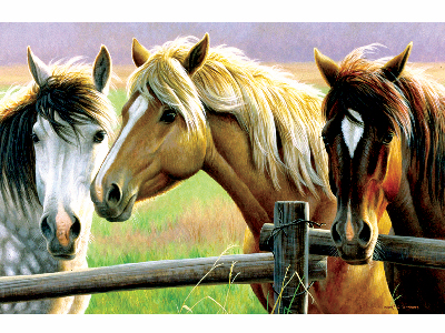 HORSE FENCE 1000pc