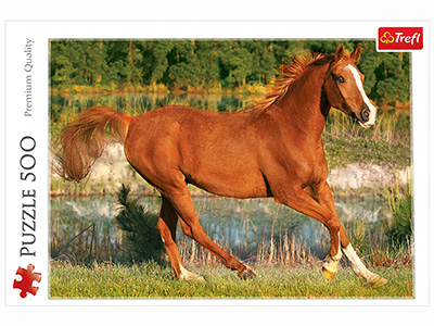 THE BEAUTY OF GALLOP 500pc